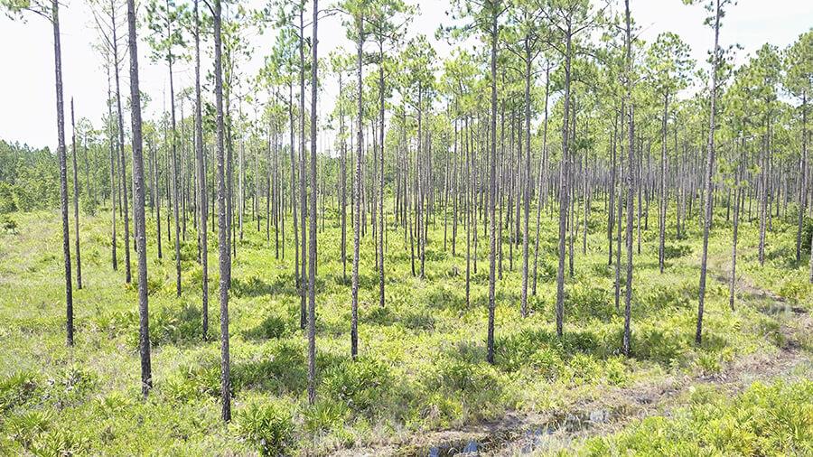 Florida, ,Land,Active,1001